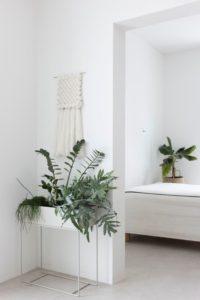 Hygge in huis planten