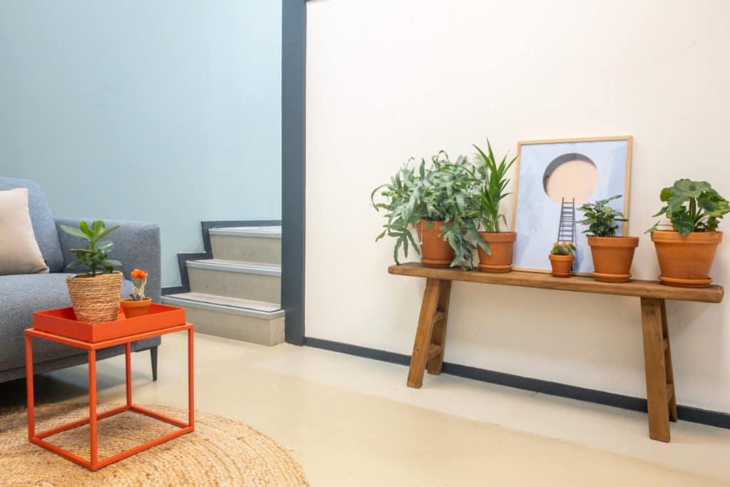 Bankje hout met potten en planten.